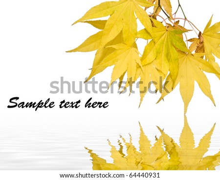 Plenty of copy space in image of Autumn fall bright golden leaves - stock photo