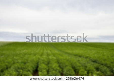 Plenty of potato flower with cloudy sky in Blur style - stock photo