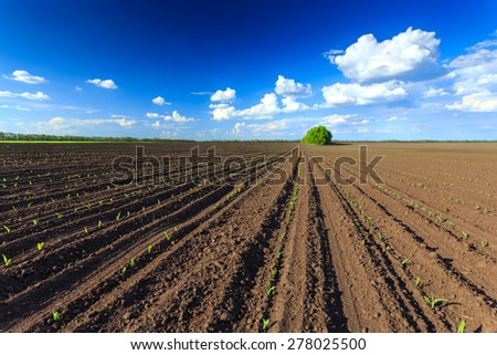 Plough - stock photo