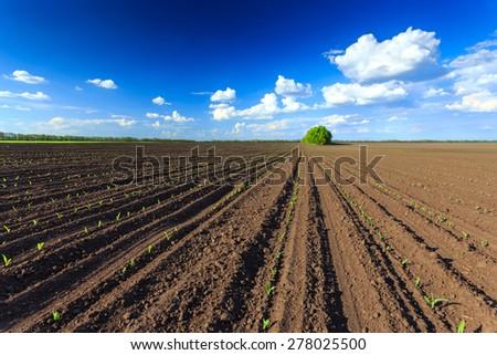 Plough - stock photo