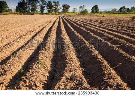 ploughed soil high raised style. Do it for defend cassava rot from drown water and boost productivity. - stock photo
