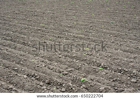 Plowed agricultural fields prepared for planting crops