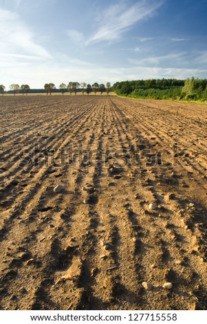 Plowed and sown field at sunset with beautiful sky