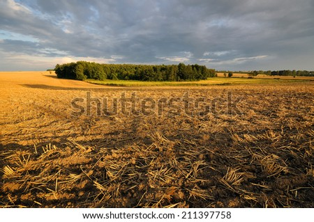 plowed field, in the forest background - stock photo