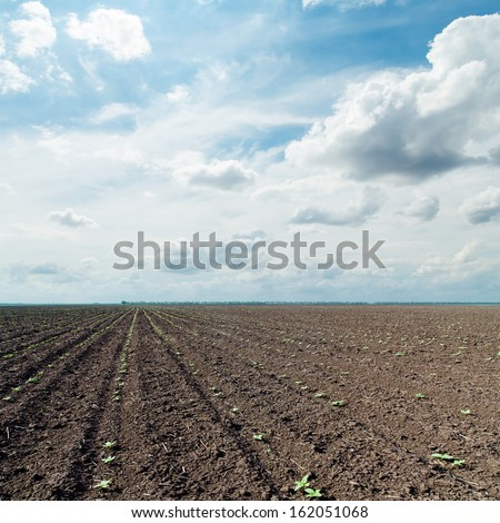 plowed field with little green shots and dramatic sky - stock photo