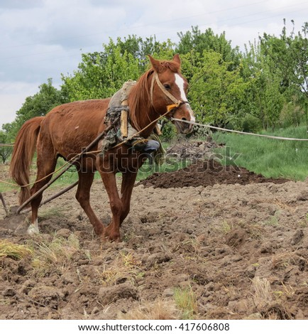 plowing fields.and working   horse