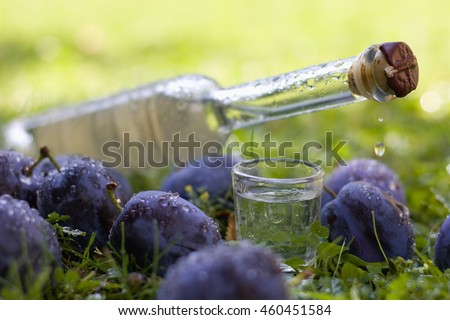 Plum brandy or schnapps with fresh and ripe plums, grassy background