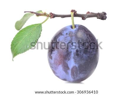 Plum fruit - stock photo