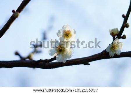 https://thumb1.shutterstock.com/display_pic_with_logo/167494286/1032136939/stock-photo-plum-in-japanese-shrine-1032136939.jpg