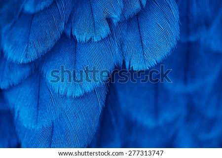 plumage background of bird close up