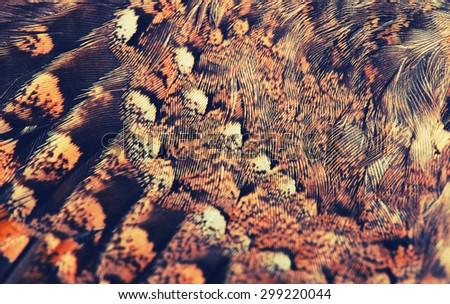 plumage background of bird closeup, cross-processing effect - stock photo