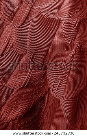 """plumage background of bird closeup, """"Marsala"""" is the color of the Year 2015 - stock photo"""