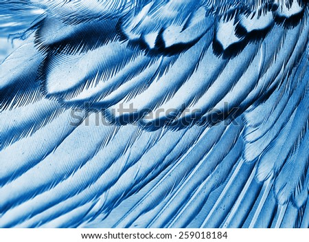 plumage background of bird closeup, x-ray effect - stock photo