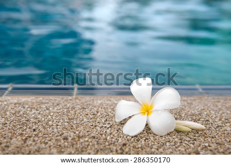 Plumeria Flower  at Edge of Pool in Tranquil Spa Setting - stock photo