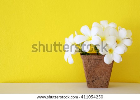 Plumeria flower blooming in coconut fiber potted with yellow wall background - stock photo