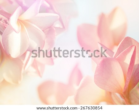 Plumeria flower in blur style for background - stock photo