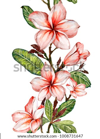 plumeria flower stock images royalty free images vectors