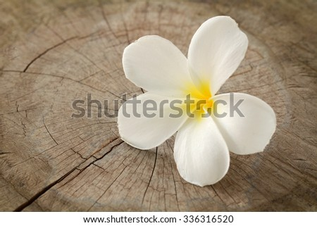 Plumeria flower on old wood floors. - stock photo