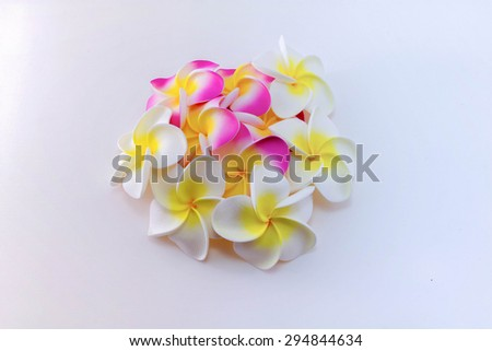 Plumeria flowers isolated on white background - stock photo