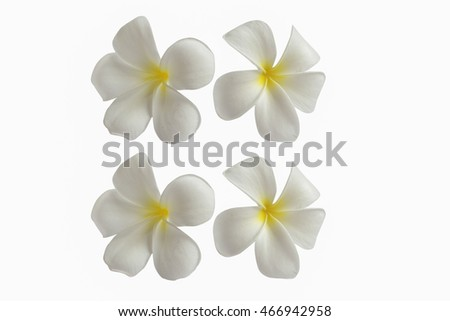 Plumeria Flowers Isolated White Background Beautiful Fresh Flower Relax Spa Decoration