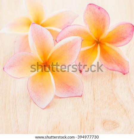 Plumeria flowers on wood background, texture - stock photo