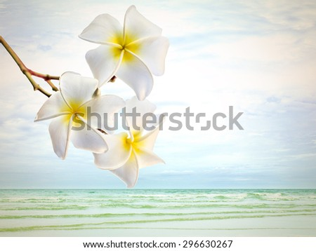 Plumeria (frangipani) flowers on the beach