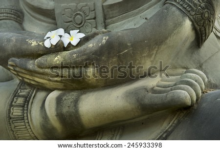 plumeria on buddha hand - stock photo