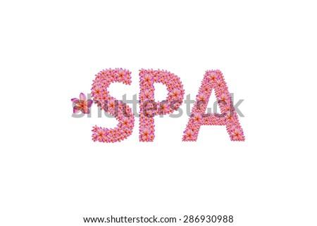 Plumeria spa text in white background isolated - stock photo