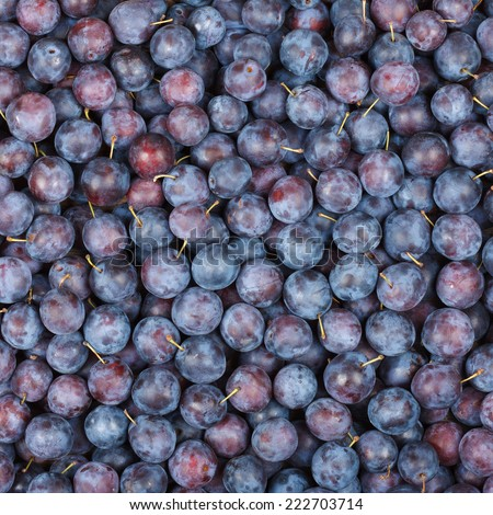 Plums Background, Top View - stock photo
