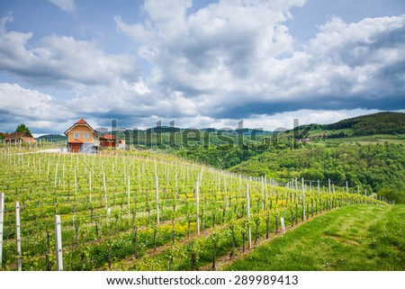 "Podgorjanska wine road, Slovenia - May 2015. Lonely house surrounded by vineyard in Dolenjska region in Slovenia, which is famous for its rose ""Cvicek""."