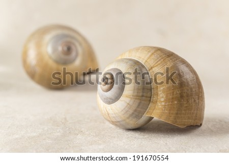 Poetic and Lonely Shell A pair of seashells that seems to try to communicate with each other - stock photo