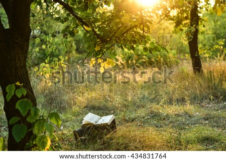 Poetry book under tree in front of sunset