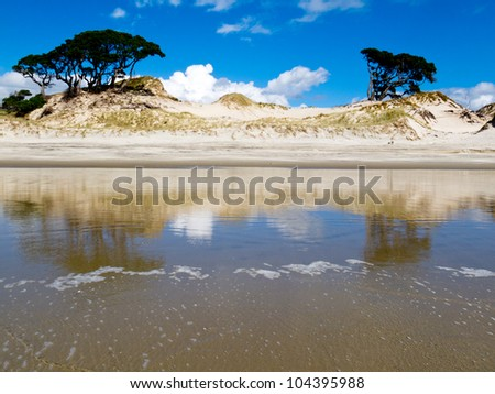 Pohutukawa, Metrosideros excelsa, trees on sand dunes and blue sky reflecting on wet sand beach at low tide at the coast of New Zealand - stock photo