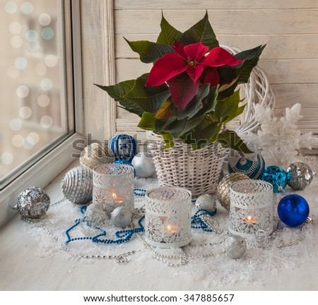 Poinsettia  (Euphorbia pulcherrima), Christmas decorations  in the window on the eve of holiday