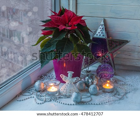Poinsettia  (Euphorbia pulcherrima), Christmas decorations  in the window on the eve of holiday (mass production of products)
