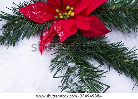 poinsettia in the snow - stock photo