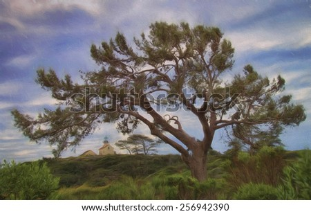 Point Loma Lighthouse in San Diego Viewed Through a Torrey Pine