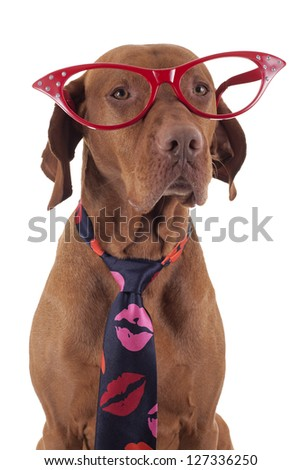 pointer dog wearing red oversize glasses and neck tie decorated with kisses - stock photo