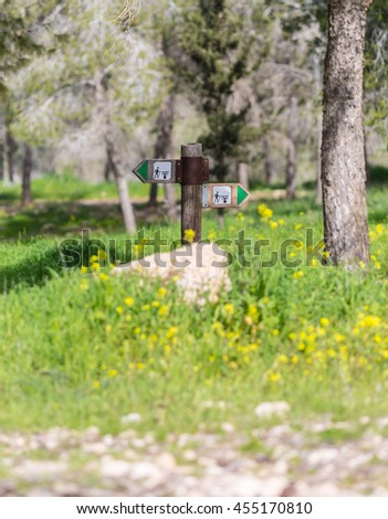 pointer in the woods with yellow flowers