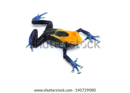 Poison dart frog on a white background (Dendrobate tinctorius Brazilian yellow head) - stock photo