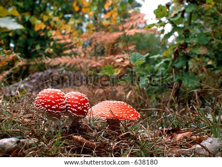 poison mushrooms