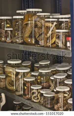 poison snakes in jars - stock photo