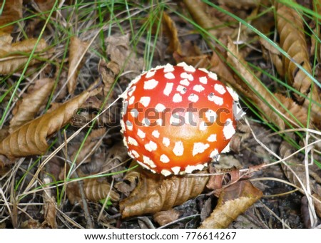 Poisonous Mushroom in Natural Forest Environment