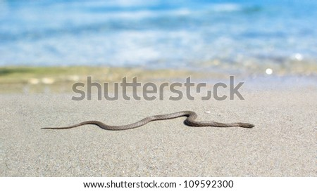Poisonous snake on a white sand