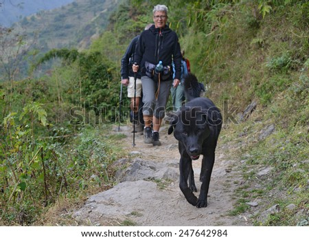 POKHARA - OCTOBER 26: dog accompanying hikers in the Pokhara trekking area on October 26, 2014 in Pokhara, Nepal. Trekking can be risky. Snowstorms have killed 39 trekkers on 14 October the same year. - stock photo