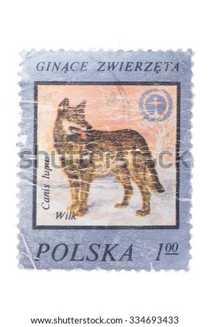 "POLAND: A stamp printed in Poland from the ""Forest Animals"" issue shows a wolf."