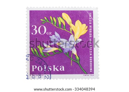 "POLAND - CIRCA 1964: A stamp is printed in Poland shows freesia flower with the inscription ""Freesia Hybrida"" from the series ""Garden Flowers"", circa 1964 - stock photo"