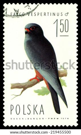 POLAND  - CIRCA 1974 : A stamp printed by Poland shows bird an Falcon  vespertinus from the series  Falcons, birds of Prey, circa 1974 - stock photo