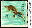 POLAND - CIRCA 1963: A stamp printed in Poland shows crested newt, series devoted to reptiles and amphibians, circa 1963 - stock photo