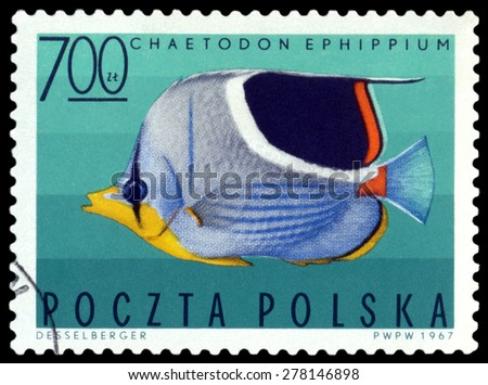 POLAND - CIRCA 1967: A stamp printed in Poland, shows  fish  Saddleback butterflyfish, from the series Tropical fish, circa 1967  - stock photo